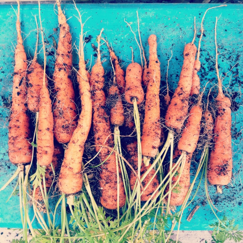 Carrot Cake Cupcakes | longdistancebaking.com